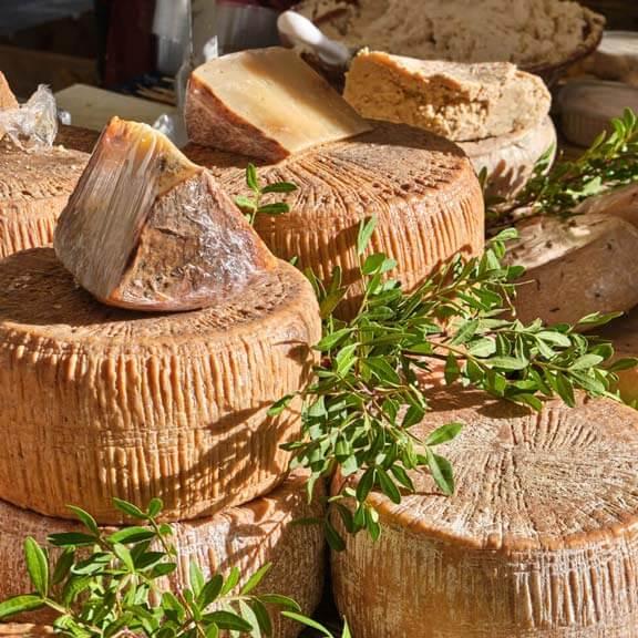 Casu Marzu, sardischer Käse mit Larven von Piophila Casei